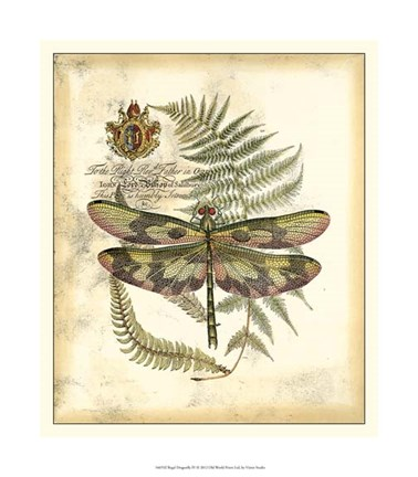 Framed Regal Dragonfly IV Print