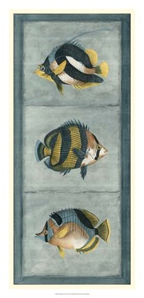 Framed Tropical Fish Trio II Print
