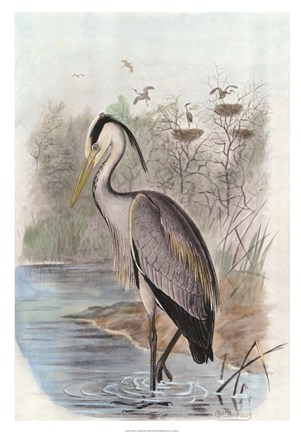 Framed Oversize Common Heron Print