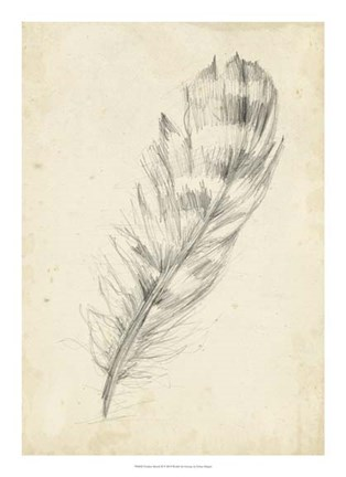 Framed Feather Sketch II Print