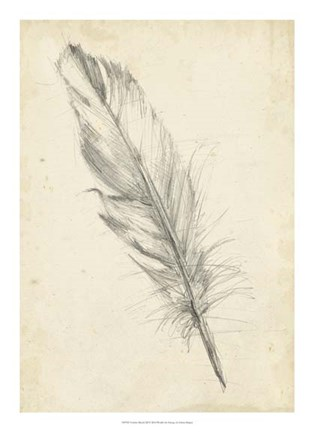 Framed Feather Sketch III Print