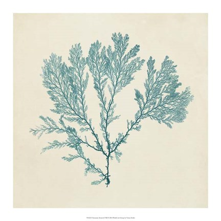 Framed Chromatic Seaweed VIII Print