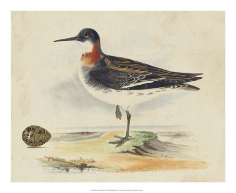 Framed Meyer Shorebirds II Print