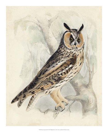 Framed Meyer Long-Eared Owl Print