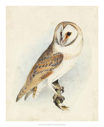 Framed Meyer Barn Owl Print