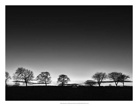 Framed Treeline Light Print
