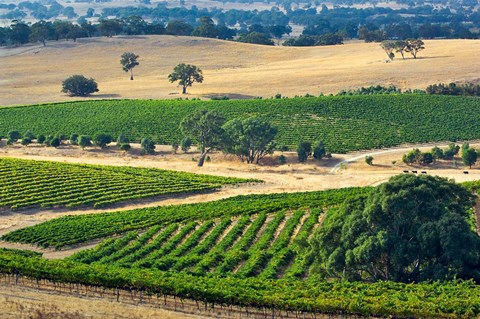 Framed Mountadam vineyard winery on High Eden Road, Barossa Valley, Australia Print