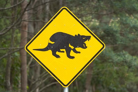 Framed Tasmanian Devil warning sign, Tasman Peninsula, Australia Print