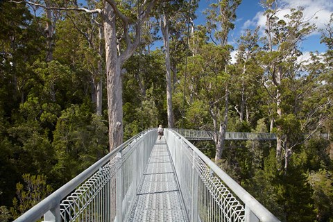 Framed AirWalk, Paths, Tahune Forest, Tasmania, Australia Print
