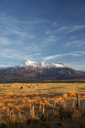 Framed Farm Scene, Mt Ruapehu, North Island, New Zealand Print