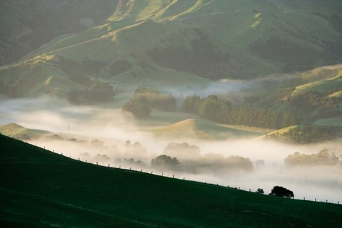 Framed Misty Farmland near Martinborough, Wairarapa, North Island, New Zealand Print
