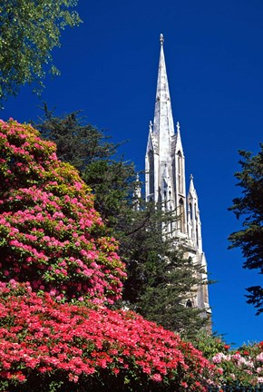 Framed Rhododendrons and First Church, Dunedin, New Zealand Print