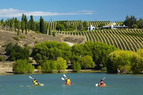 Framed Kayakers and vineyard, Bannockburn Inlet, Lake Dunstan, Central Otago, South Island, New Zealand Print