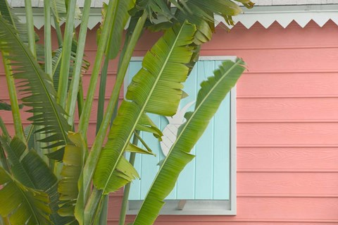 Framed Palm and Pineapple Shutters Detail, Great Abaco Island, Bahamas Print