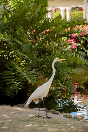 Framed White Egret tropical bird, Bavaro, Higuey, Punta Cana, Dominican Republic Print