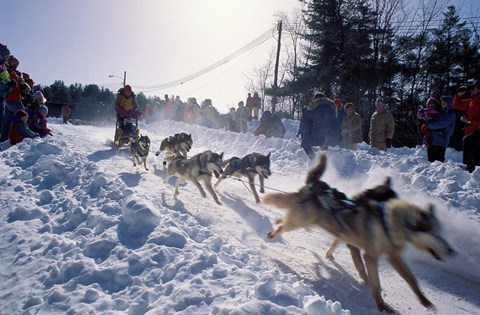 Framed Sled Dog Team Starting Their Run on Mt Chocorua, New Hampshire, USA Print