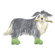 Shaggy Dog I  Fine Art Print