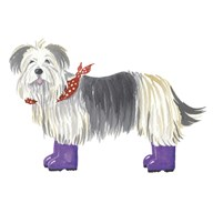 Shaggy Dog II  Fine Art Print