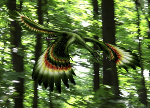 Framed Archaeopteryx flying through a forest Print