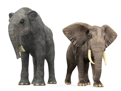 Framed adult Deinotherium compared to a modern adult African Elephant Print