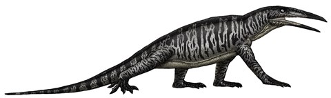 Framed Teraterpeton, an Archosauromorph from the Late Triassic Print