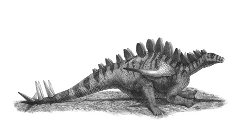 Framed Pencil Drawing of Gigantspinosaurus Sichuanensis Print