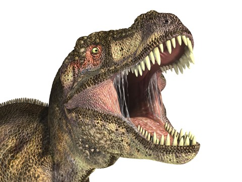 Close Up Of Tyrannosaurus Rex Dinosaur With Mouth Open
