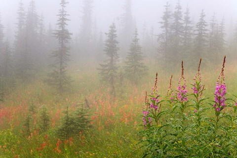 Framed Misty Meadow Scenic, Revelstoke National Park, British Columbia, Canada Print