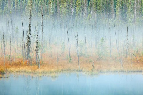 Framed Foggy pond and forest, Mount Robson PP, British Columbia, Canada Print