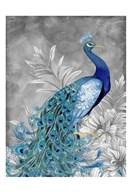 Peacock Beauty 2  Fine Art Print