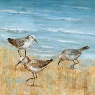 Sandpipers II  Fine Art Print