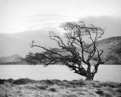 Framed Connemara Tree I Print