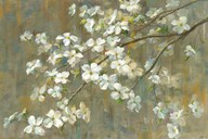 Dogwood in Spring  Fine Art Print
