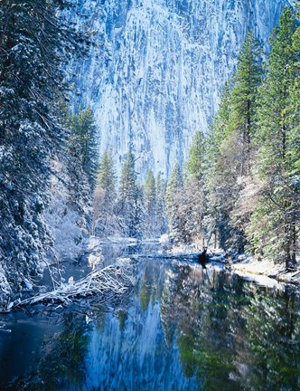 Framed Winter trees along Merced River, Yosemite Valley, Yosemite National Park, California Print