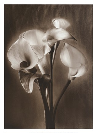 Framed Calla Bouquet Print