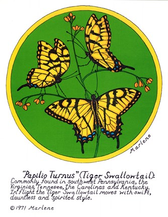 Framed Tiger Swallowtail Print