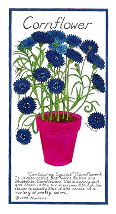 Framed Cornflower Print