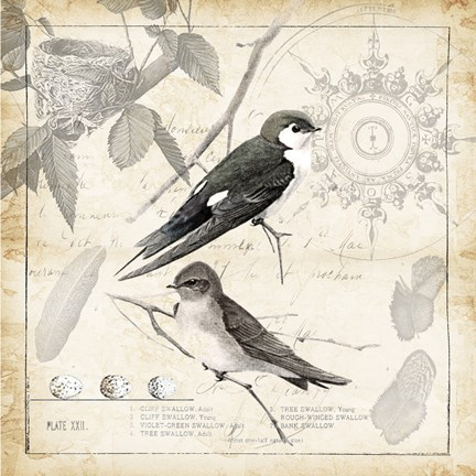 Framed Botanical Birds Black Cream II Print