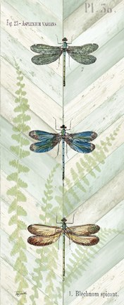 Framed Dragonfly Botanical Panels I Print