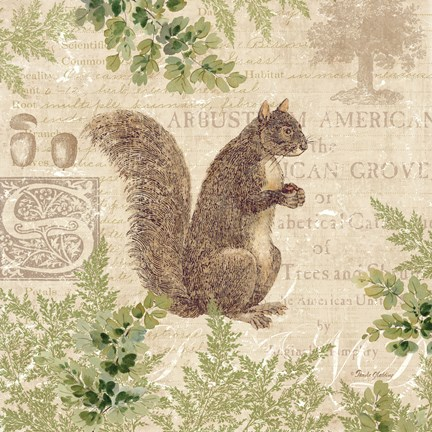 Framed Woodland Trail III (Squirrel) Print