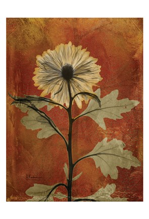Framed Chrysanthemum Orange II Print