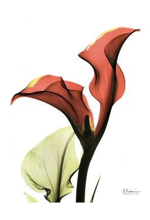 Framed Calla Lily Red Print