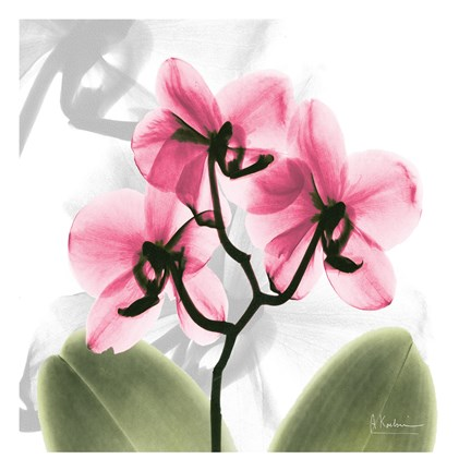 Framed Orchid Pink Print