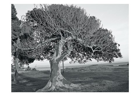 Framed One Tree BW Print