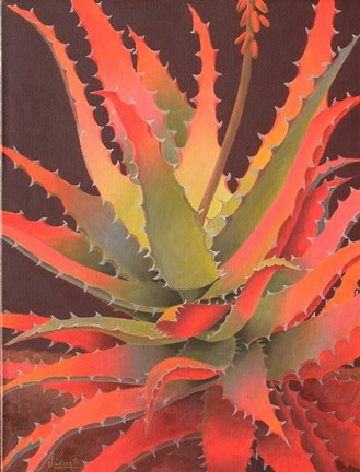 Sunset Agave Fine Art Print By Sharon Weiser At