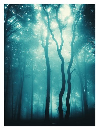 Framed Blue Light Woods Print