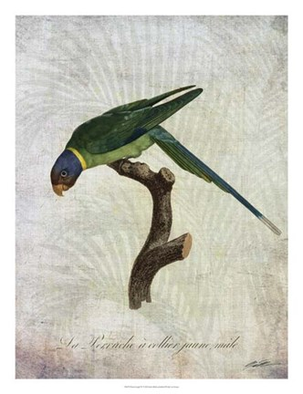 Framed Parrot Jungle IV Print