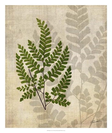 Framed British Ferns VI Print