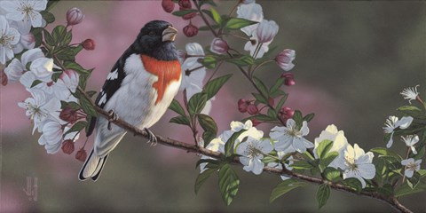 Framed Rose Breasted Grosbeak and Apple Blossoms Print