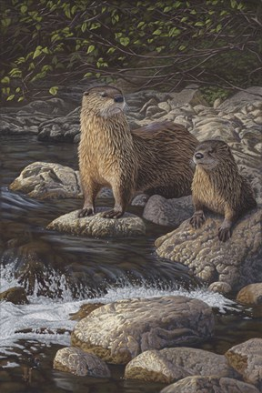 Framed Otter Tail River Otters Print